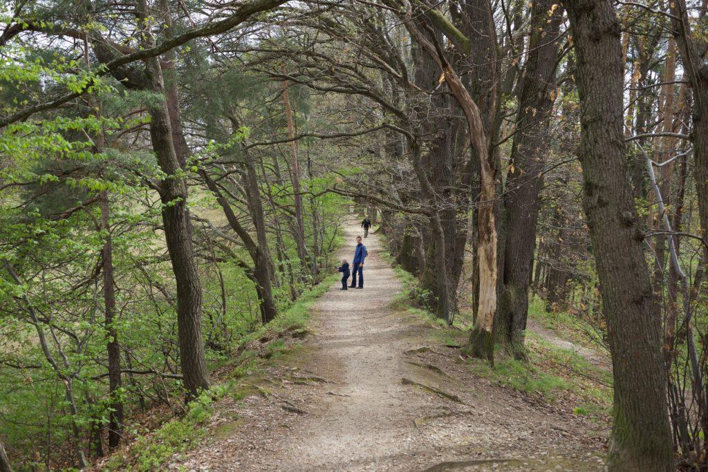 Graz: Andritz – Platte – Rettenbachklamm – Mariatrost
